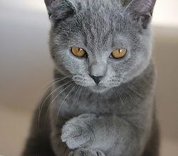 Lustige Katzen Bilder 2 250x220 - Lustige Katzen Bilder 2