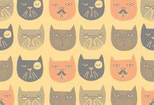 Lustige Katzen Bilder 220x150 - Lustige Katzen Bilder