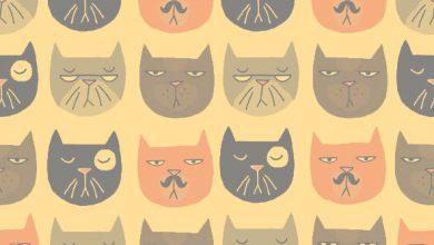 Lustige Katzen Bilder 390x220 - Lustige Katzen Bilder