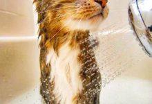 Lustige Katzen Bilder Geburtstag Bilder Kostenlos 220x150 - Lustige Katzen Bilder Geburtstag Bilder Kostenlos