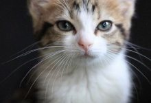 Lustige Katzen Bilder Kostenlos 220x150 - Lustige Katzen Bilder Kostenlos
