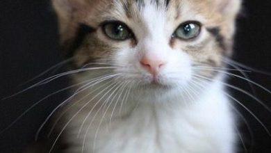 Lustige Katzen Bilder Kostenlos 390x220 - Lustige Katzen Bilder Kostenlos