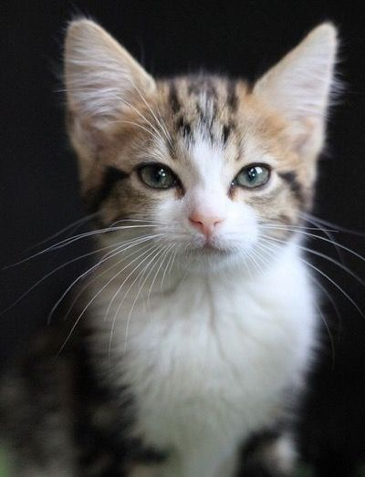 Bunte Katzen Bilder | Bilder und Sprüche für Whatsapp und ...