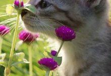 Lustige Katzen Bilder Sprüche 220x150 - Lustige Katzen Bilder Sprüche