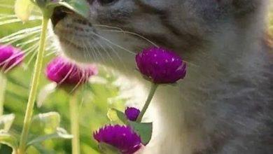 Lustige Katzen Bilder Sprüche 390x220 - Lustige Katzen Bilder Sprüche