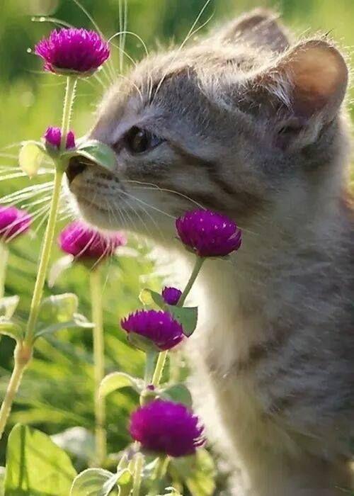 Lustige Katzen Bilder Sprüche - Lustige Katzen Bilder Sprüche