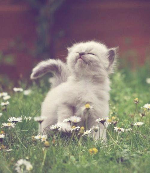 Lustige Katzen Clips - Lustige Katzen Clips