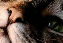 Lustige Katzen Fotos 220x150 - Lustige Katzen Fotos