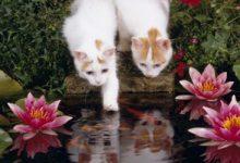 Lustige Katzen Fotos Bilder Kostenlos 220x150 - Lustige Katzen Fotos Bilder Kostenlos