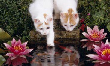 Lustige Katzen Fotos Bilder Kostenlos 366x220 - Lustige Katzen Fotos Bilder Kostenlos