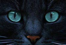 Lustige Katzen Videos 220x150 - Lustige Katzen Videos