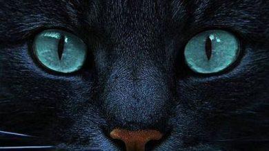 Lustige Katzen Videos 390x220 - Lustige Katzen Videos