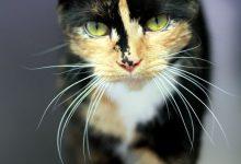 Lustige Katzen Videos Kostenlos 220x150 - Lustige Katzen Videos Kostenlos