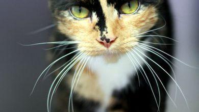 Lustige Katzen Videos Kostenlos 390x220 - Lustige Katzen Videos Kostenlos