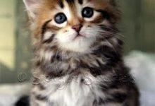 Lustige Katzenbabys Bilder Bilder Kostenlos 220x150 - Lustige Katzenbabys Bilder Bilder Kostenlos