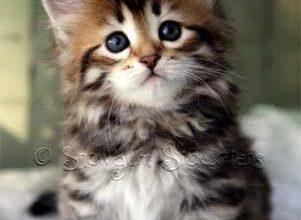 Lustige Katzenbabys Bilder Bilder Kostenlos 301x220 - Lustige Katzenbabys Bilder Bilder Kostenlos