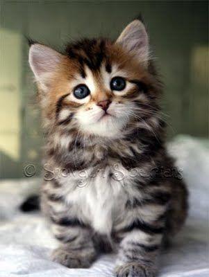 Lustige Katzenbabys Bilder Bilder Kostenlos - Lustige Katzenbabys Bilder Bilder Kostenlos