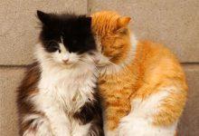 Lustige Katzenbilder Für Facebook 220x150 - Lustige Katzenbilder Für Facebook