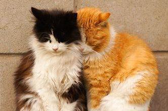 Lustige Katzenbilder Für Facebook 332x220 - Lustige Katzenbilder Für Facebook
