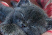 Lustige Katzenbilder Gemalt 220x150 - Lustige Katzenbilder Gemalt