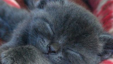Lustige Katzenbilder Gemalt 390x220 - Lustige Katzenbilder Gemalt