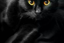 Lustige Katzenbilder Mit Sprüchen 220x150 - Lustige Katzenbilder Mit Sprüchen