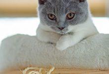 Lustige Katzenbilder Mit Sprüchen Deutsch 220x150 - Lustige Katzenbilder Mit Sprüchen Deutsch