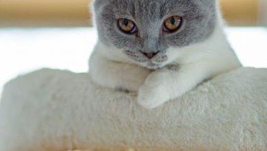 Lustige Katzenbilder Mit Sprüchen Deutsch 390x220 - Lustige Katzenbilder Mit Sprüchen Deutsch