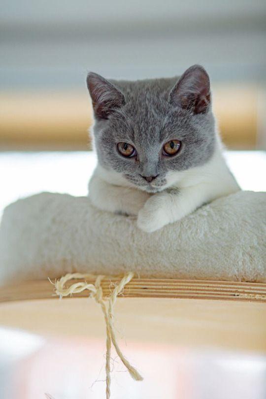 Lustige Katzenbilder Mit Sprüchen Deutsch - Lustige Katzenbilder Mit Sprüchen Deutsch