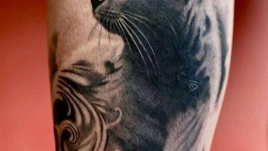 Lustige Katzenbilder Mit Spruch 390x220 - Lustige Katzenbilder Mit Spruch