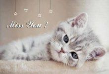 Lustige Katzenbilder Mit Text 220x150 - Lustige Katzenbilder Mit Text