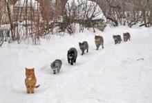 Lustige Katzenbilder Mit Text Bilder Kostenlos 220x150 - Lustige Katzenbilder Mit Text Bilder Kostenlos