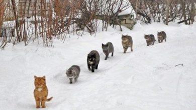 Lustige Katzenbilder Mit Text Bilder Kostenlos 390x220 - Lustige Katzenbilder Mit Text Bilder Kostenlos