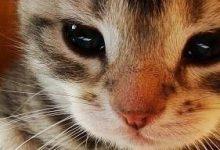 Lustige Katzenbilder Mit Text Deutsch 220x150 - Lustige Katzenbilder Mit Text Deutsch