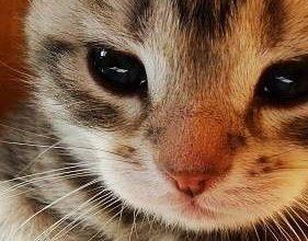 Lustige Katzenbilder Mit Text Deutsch 281x220 - Lustige Katzenbilder Mit Text Deutsch
