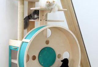 Lustige Katzenbilder Zum Geburtstag Bilder Kostenlos 320x220 - Lustige Katzenbilder Zum Geburtstag Bilder Kostenlos