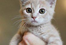 Lustige Katzenfotos Kostenlos 220x150 - Lustige Katzenfotos Kostenlos