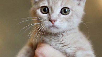 Lustige Katzenfotos Kostenlos 390x220 - Lustige Katzenfotos Kostenlos