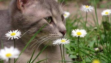 Lustige Katzenkinder 390x220 - Lustige Katzenkinder