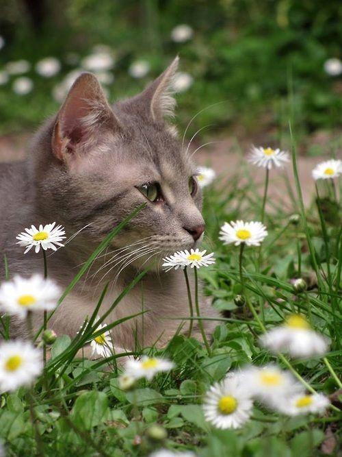 Lustige Katzenkinder - Lustige Katzenkinder