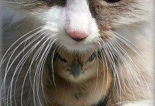Lustige Videos Über Katzen 220x150 - Lustige Videos Über Katzen