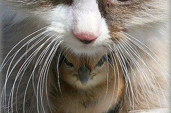 Lustige Videos Über Katzen 334x220 - Lustige Videos Über Katzen