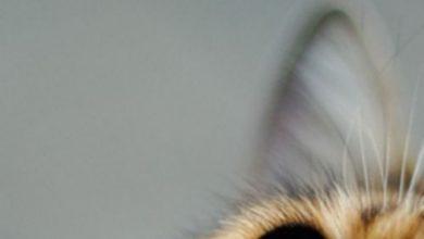 Lustige Videos Katzen 390x220 - Lustige Videos Katzen