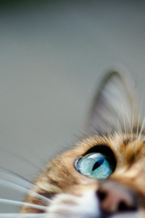 Lustige Videos Katzen - Lustige Videos Katzen
