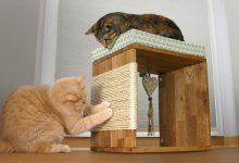 Lustige Videos Mit Katzen 220x150 - Lustige Videos Mit Katzen