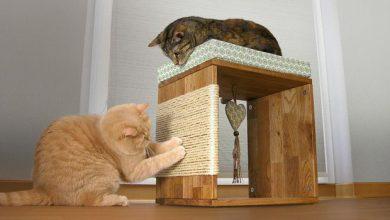 Lustige Videos Mit Katzen 390x220 - Lustige Videos Mit Katzen