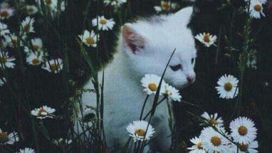 Lustiges Über Katzen 390x220 - Lustiges Über Katzen
