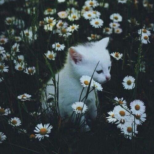 Lustiges Über Katzen - Lustiges Über Katzen
