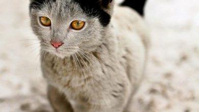 Meine Katze 390x220 - Meine Katze