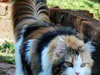 Menkun Katze Bilder 198x150 - Menkun Katze Bilder